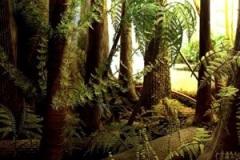 Karbon (Carboniferous) 360 Mio. Jahre